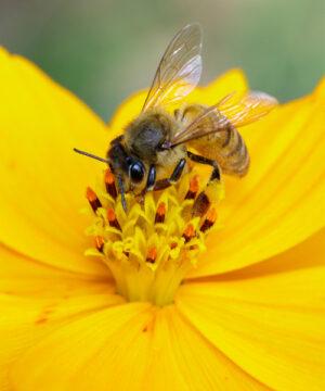 Курс Пчеловодство