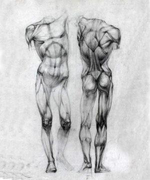 Курс Рисуем человека. Анатомия