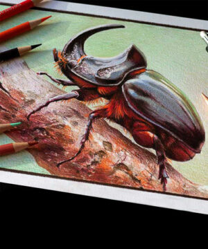 Курс рисунка цветными карандашами